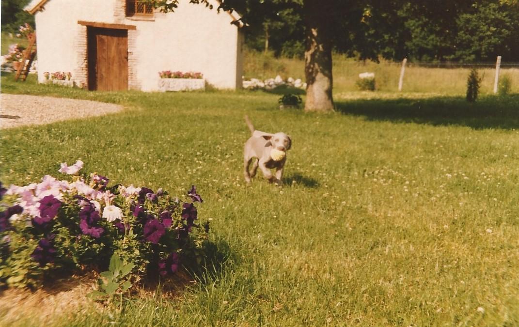 1984 vannessa avec une eponge chippee